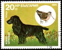 保加利亚-大约1985年:邮票,打印在保加利亚,显示一只猎犬和鸟鹬 库存图片