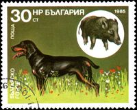 保加利亚-大约1985年:邮票,打印在保加利亚,显示保加利亚小猎犬和野公猪 库存照片