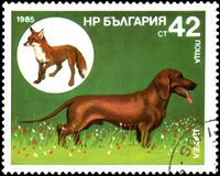 保加利亚-大约1985年:邮票,打印在保加利亚,显示达克斯猎犬和镍耐热铜 库存照片