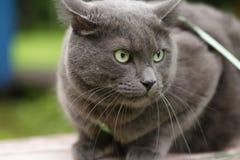 保卫他的疆土的恼怒的猫 免版税库存图片