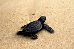 保存乌龟, 免版税库存图片