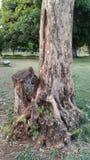 保存环境救球树 库存图片