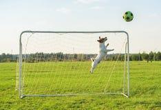 保存目标的滑稽的足球橄榄球守门员老板 库存照片