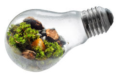 保存自然世界电灯泡有白色背景 免版税图库摄影