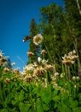 保存蜂-,由于他们关于令人敬畏的` 图库摄影