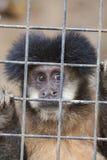 保存猴子 免版税图库摄影