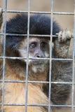 保存猴子 库存照片