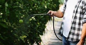 保护他的有化学制品的年轻农夫植物 库存照片