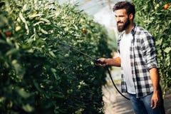 保护他的有化学制品的年轻农夫植物 库存图片