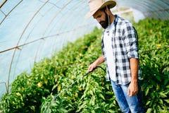 保护他的有化学制品的年轻农夫植物 免版税库存图片