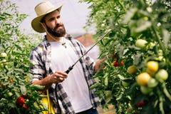 保护他的有化学制品的年轻农夫植物 免版税库存照片
