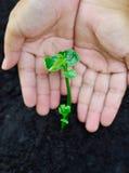 保护和关心年幼植物 库存图片