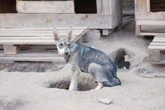 保护开掘在陆运的狗一个漏洞 免版税图库摄影