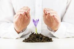 保护春天小苍兰花的人 免版税库存图片