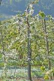 保护的果子庄稼 库存图片
