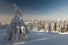 保护的横向地区Kysucke Beskydy,斯洛伐克 免版税图库摄影