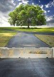 保护结构树 免版税库存照片