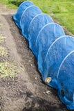 保护菜和果类植物的净隧道免受鸟 免版税图库摄影