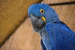保护鸟  免版税库存图片