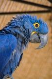 保护鸟  库存照片