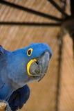 保护鸟  免版税图库摄影