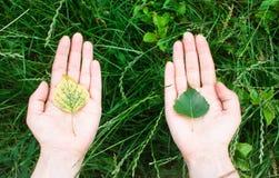保护,生态,环境的概念 免版税图库摄影