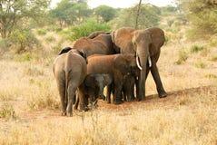 保护婴孩大象的大象 免版税库存图片