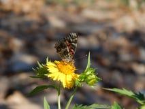 保持平衡的蝴蝶 库存照片