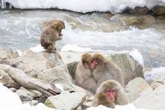 保持温暖:雪猴子容忍 免版税图库摄影