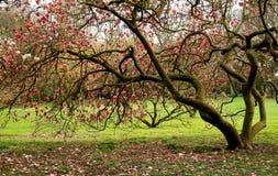 保泰松在公园威尔士之外的加的夫城& 免版税库存图片