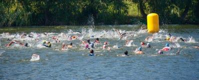 保温潜水服游泳的小组人在三项全能 免版税库存图片