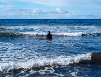 保温潜水服的单独潜水者 免版税库存图片