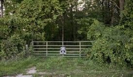 保留在树木繁茂的足迹的张贴的标志 免版税库存照片