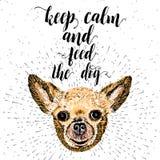 保留安静并且喂养狗 库存照片