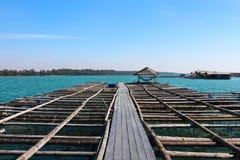 保留的活鱼浮动篮子在水 库存图片
