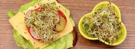 滚保龄球用紫花苜蓿和萝卜新芽和素食三明治 库存图片