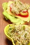 滚保龄球用紫花苜蓿和萝卜新芽和素食三明治 免版税库存照片