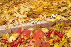 信件和下落的干叶子和红色莓果 库存照片