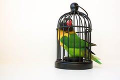 信用概念 在笼子的一只鹦鹉 在白色 免版税库存图片