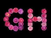 信件G,从明亮的翠菊的H 库存照片