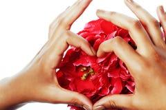 修剪修脚人手概念,在拿着桃红色玫瑰花的心脏形状的妇女手指 免版税图库摄影