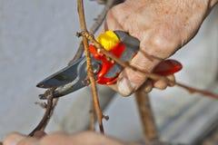 修剪剪枝夹结构树 库存照片