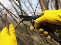 修剪春天结构树 库存图片