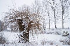 修剪树枝在雪的柳树在有木j的一个冻池塘 免版税库存图片
