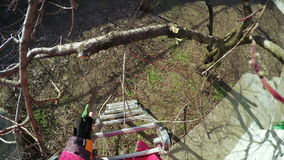 修剪树 股票视频