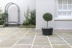 修剪的花园在一个罐的庭院树有装饰小卵石基地替换者的 库存照片