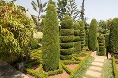修剪的花园在丰沙尔,马德拉岛海岛植物园里  免版税库存照片