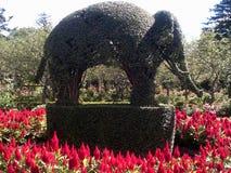 修剪的花园大象 免版税库存图片