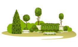 修剪的花园庭园花木 库存照片