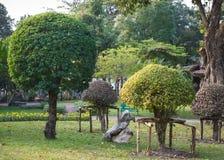 修剪的花园庭院 库存图片